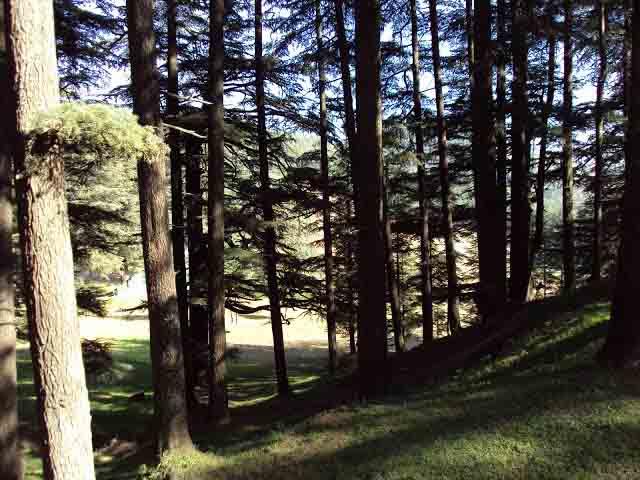Jungle walks in Naldehra