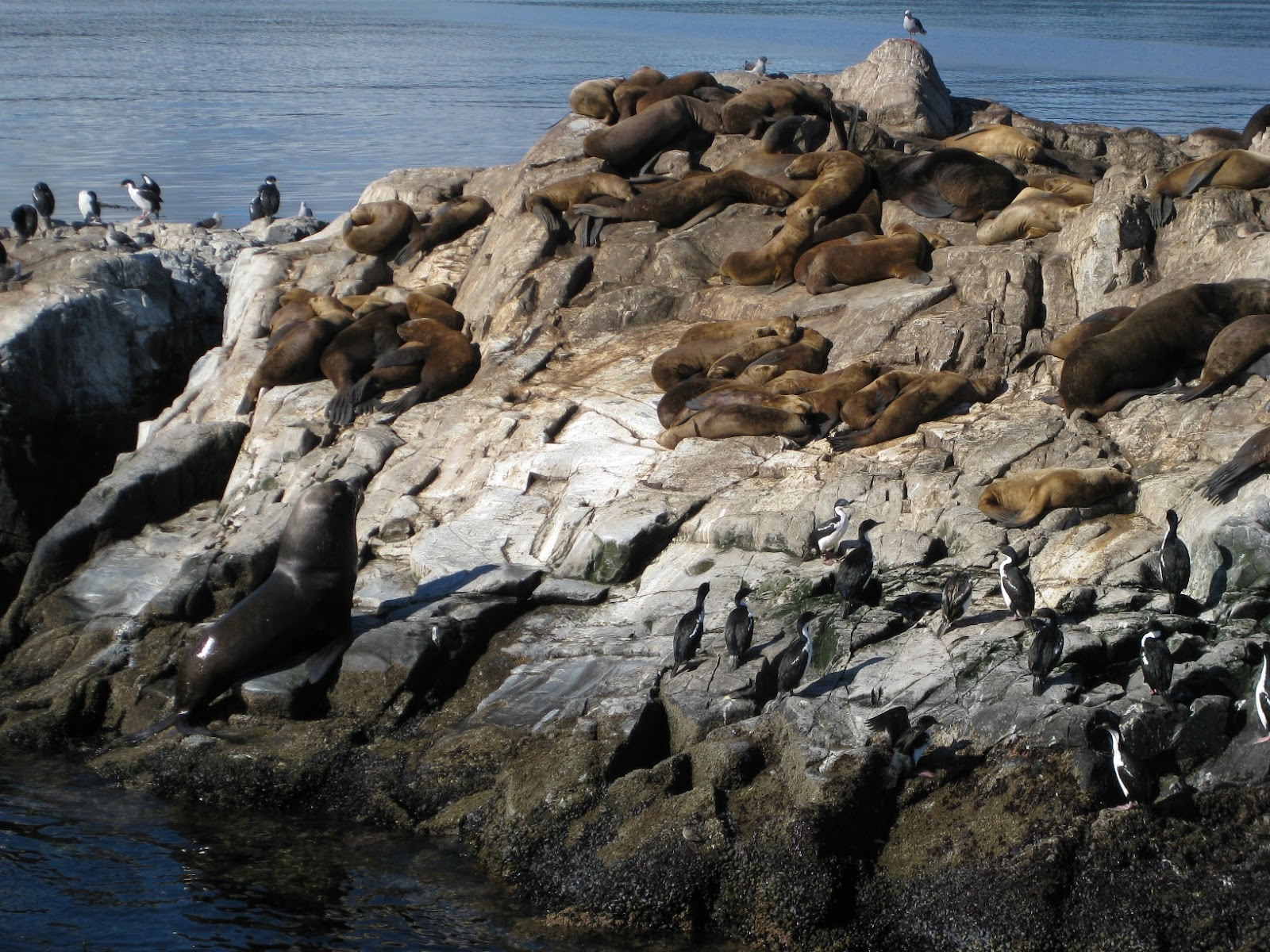 The birds and the sealions seem to tolerate each other