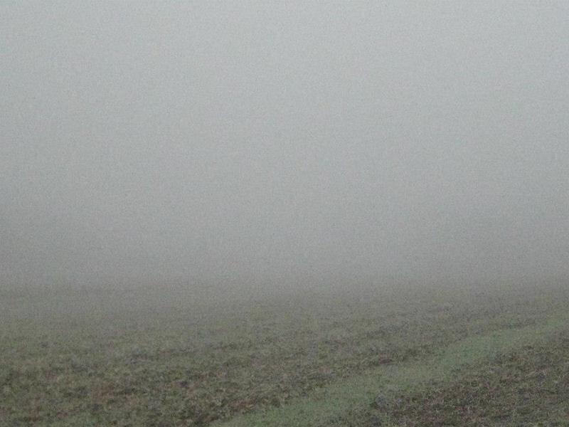 Foggy Fields