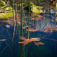 20110921_hosmer_lake_P9180444