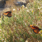 Butterflies followed us throughout our journey