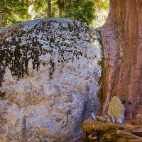 sequoia_3