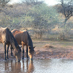 Water hole