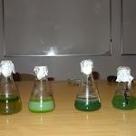 Spotkania biologów - Toksyczne sinice