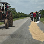 Drying of the rice is probably efficient on hot asphalt, and traffic is not a problem at all in Cuba