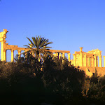 Vue depuis l'oasis : palmiers et colonnes