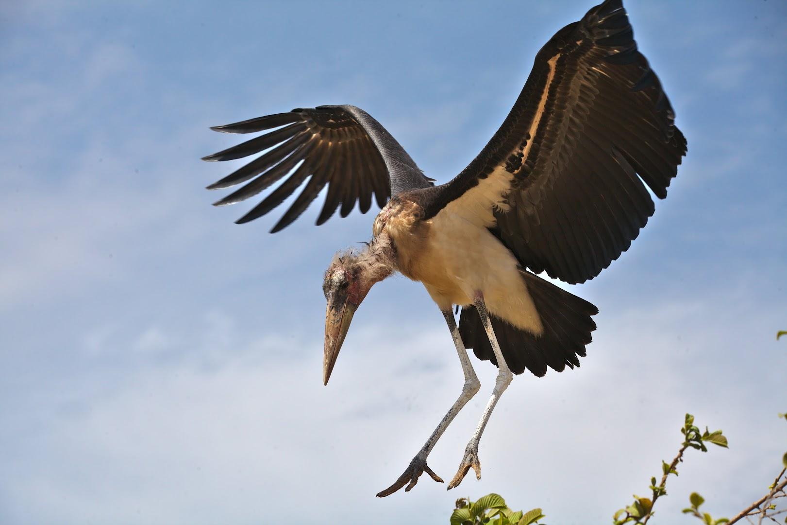 Marabu landing