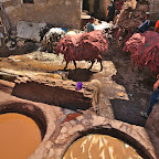 After dying the leather is put onto donkeys for transport