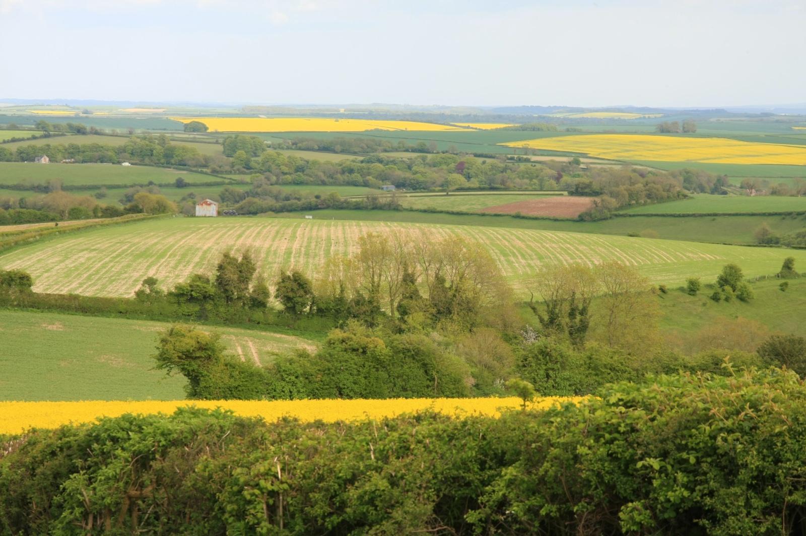 Random countryside