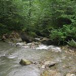 Západní část NP Borjomi-Kharagauli má charakter subtropického pralesa. Je tam vedro a pot se vůbec neodpařuje.