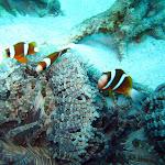 Dive Trip - 14 May 11 to 16 May 11