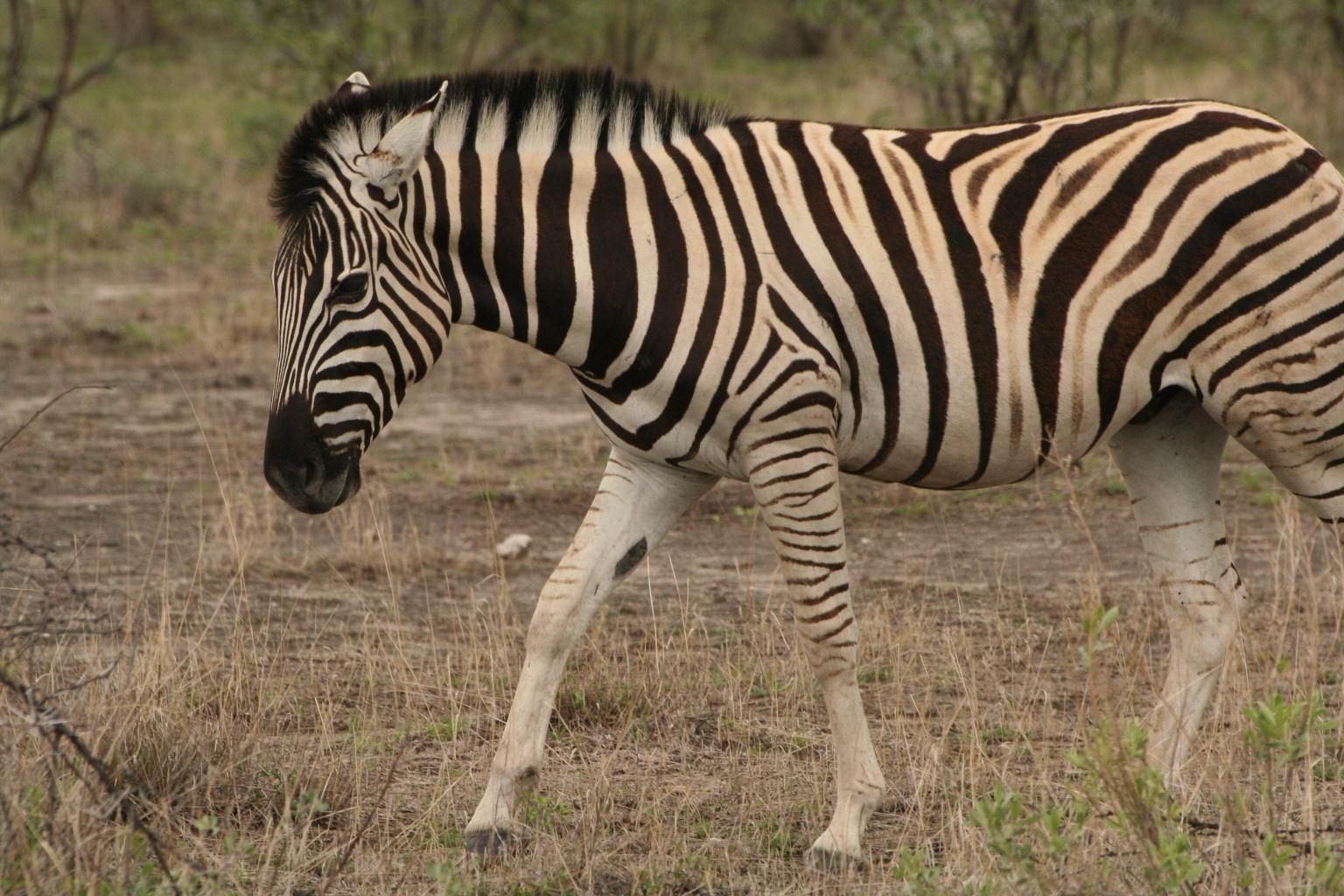 Zebra approach