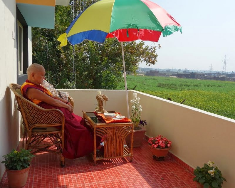 Lama Zopa Rinpoche offering his breakfast on the backside patio of Root Institute, Bodhgaya, India. In the background, all the mustard seed plants are in bloom, February 2014. Photo by Ven. Roger Kunsang.