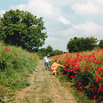 Poppies on Coffin Way, 1996
