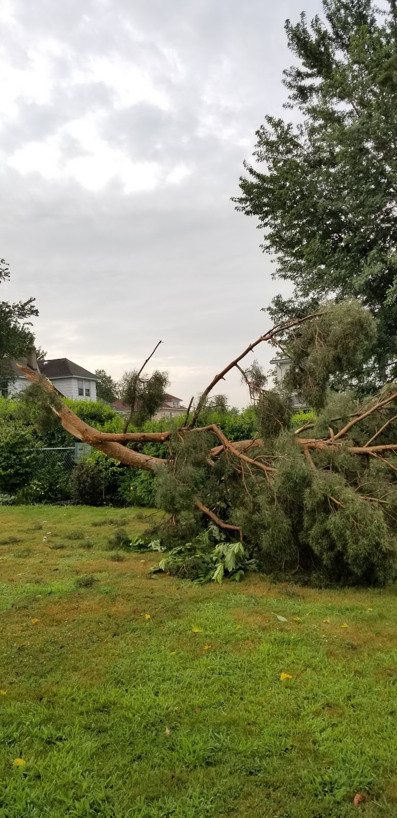 That time a bad storm crashed this tree into my yard. I lost my yoshino cherry tree sadly 😔 July 31, 2019