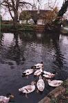 swan weir