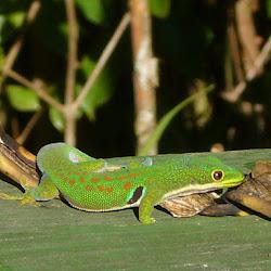 2007 - Madagascar