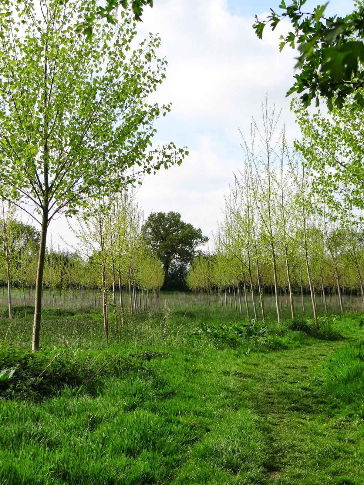 Regimented Trees