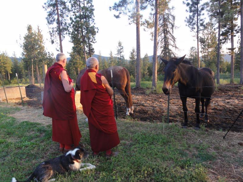 Blessing horses
