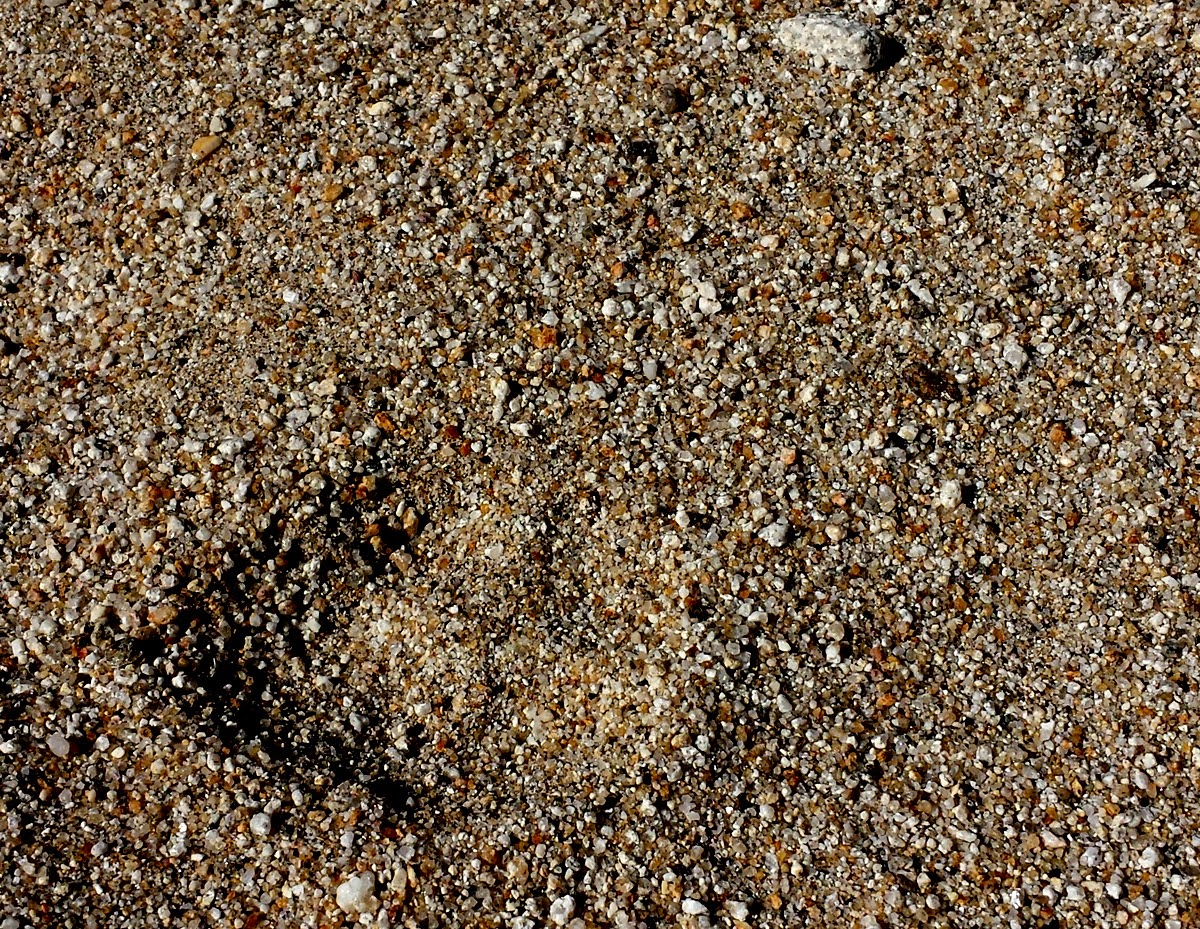 Not sure what kind of footprint this was.