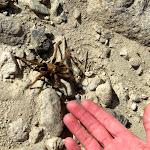 Who's afraid of tarantulas? Not me :-)