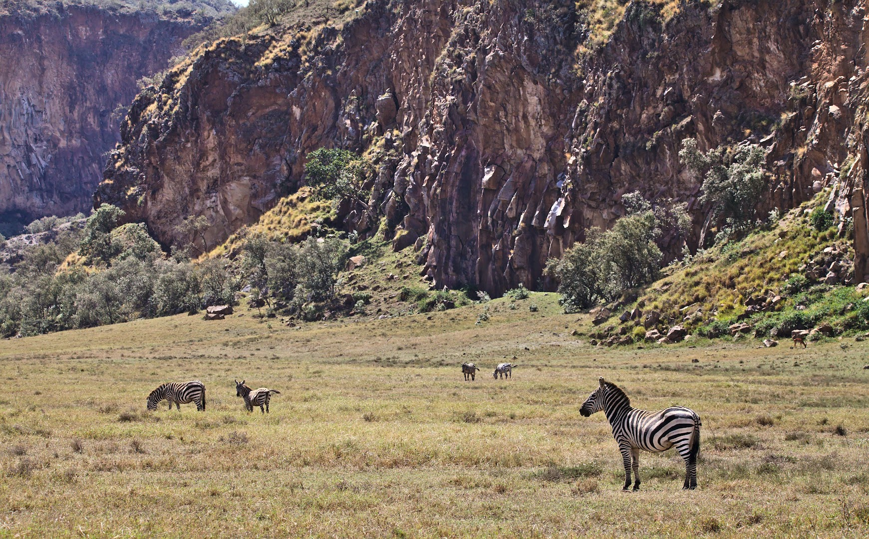 Hell's Gate has lots of zebras