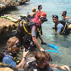 None of Cuban diving agencies are members of PADI