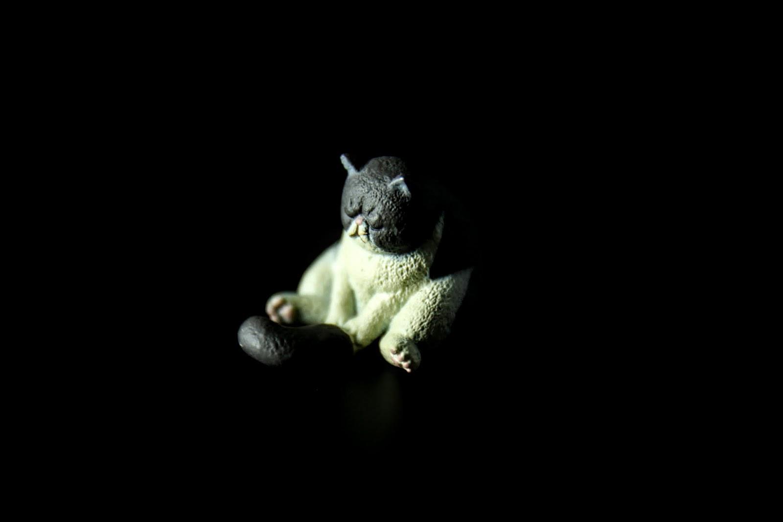 貓坐著睡會抱尾巴嗎?