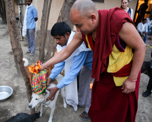 Blessing the dogs at MAITRI Institute, Bodhgaya, India, February 2015. Photo by Ven. Thubten Kunsang.