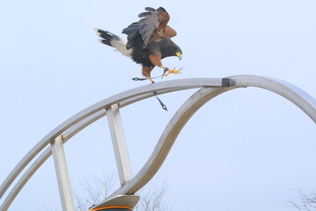 Opening Speeltuin en Roofvogelshow 17 maart 2007 - Nr_113