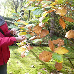 Arboretum Walk 2010