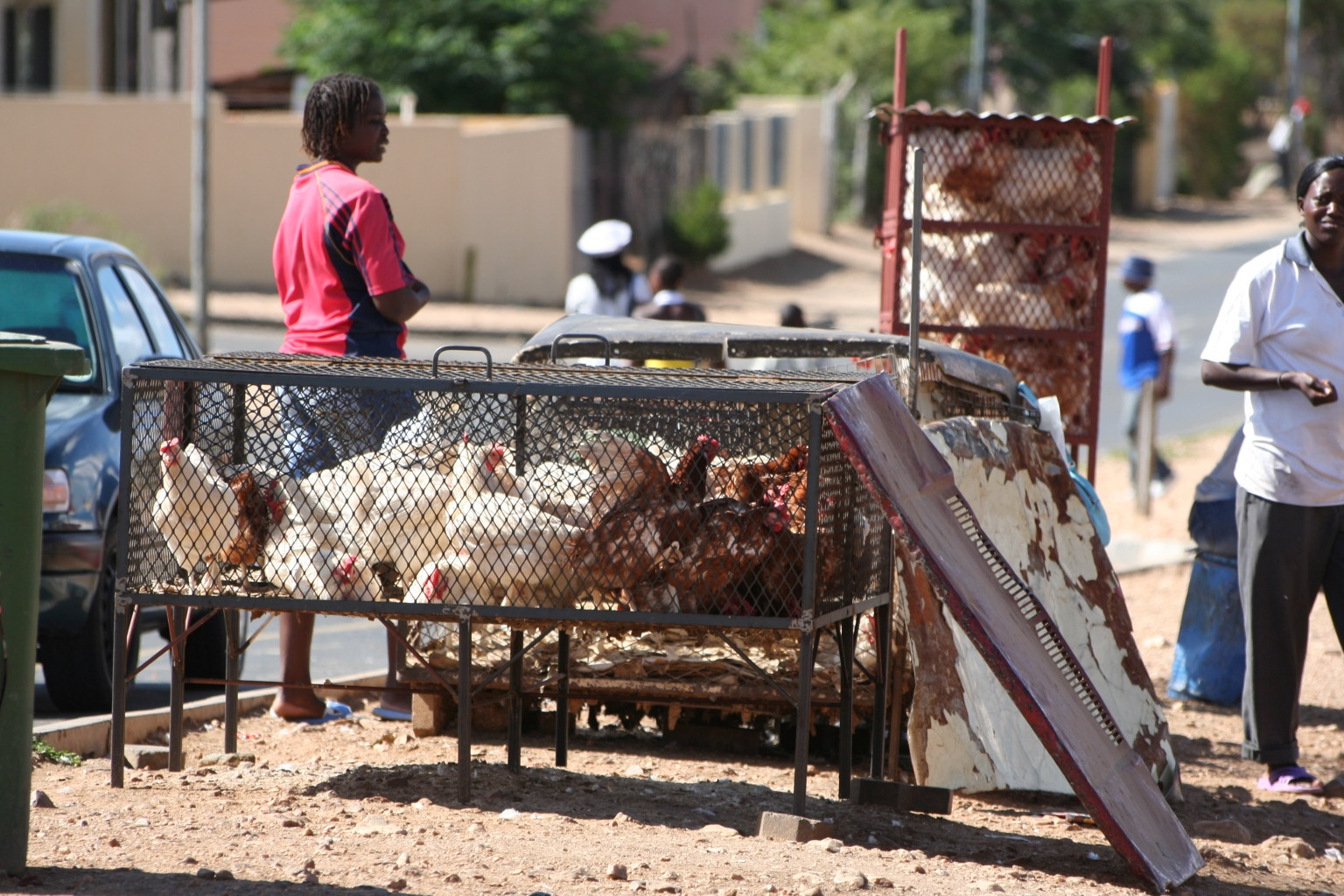 Live chickens at township market