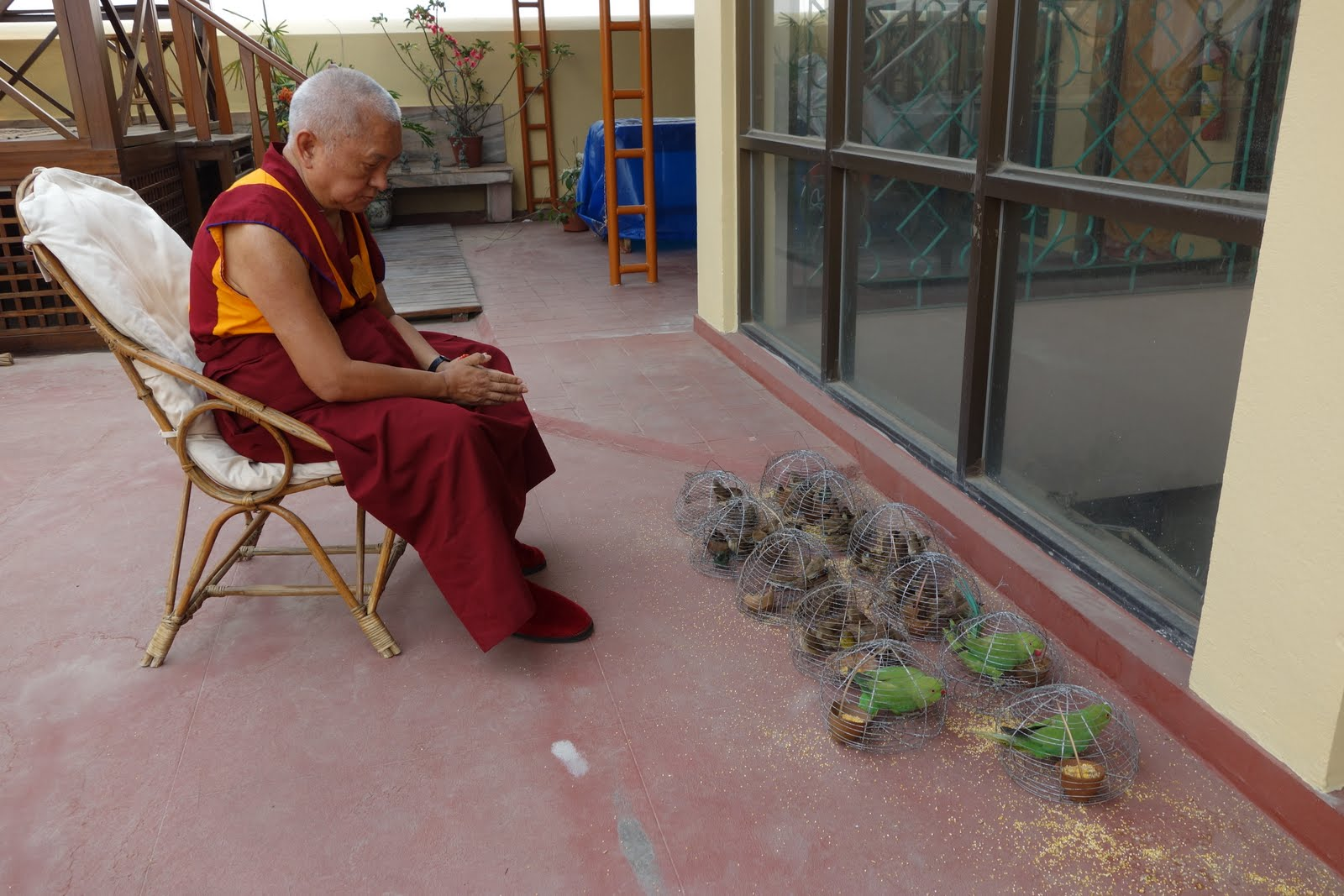 This morning at the stupa Rinpoche bought these birds in order to release them. Here he is reciting many mantras before releasing. It is 4-15pm still no lunch, still blessing the birds. Photo by Ven. Roger Kunsang.