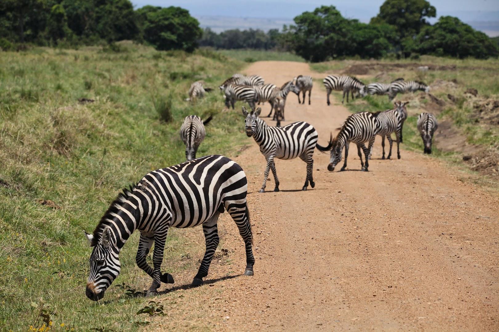 Roadblock, African style