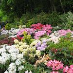 Raymond Heidt's Garden