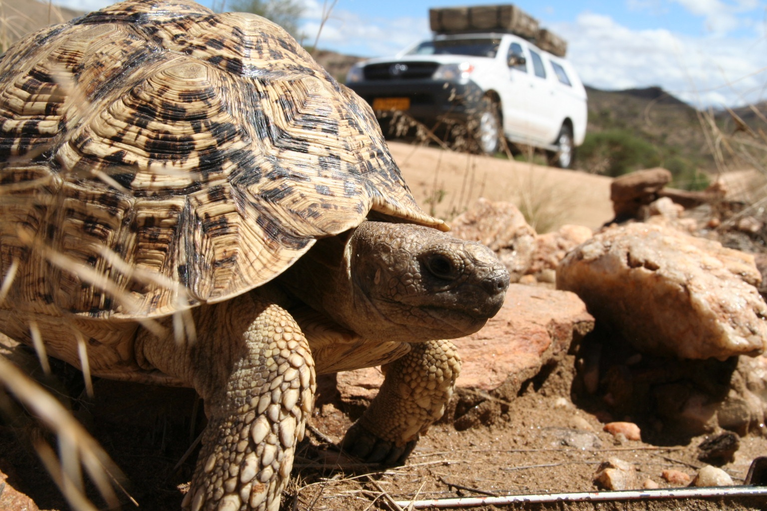First animal encounter outside Windhoek (quite a large one)