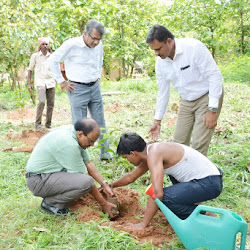 Observance of World Environment Day-2016