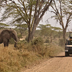 In Serengeti we started seeing other tourists on guided tours
