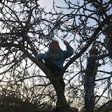 Našli jsme strom, který je zvyklý, že na něj všichni lezou.