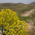 Highland meadows - Morocco has very diverse landscapes