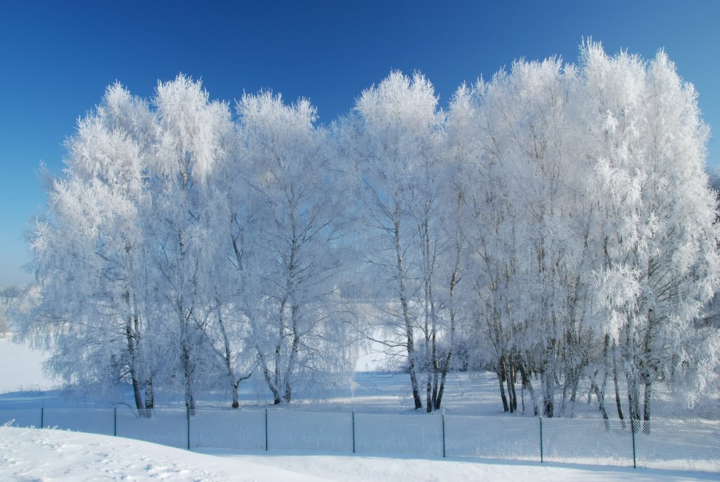 Ladovská zima 2010 - DSC_1585