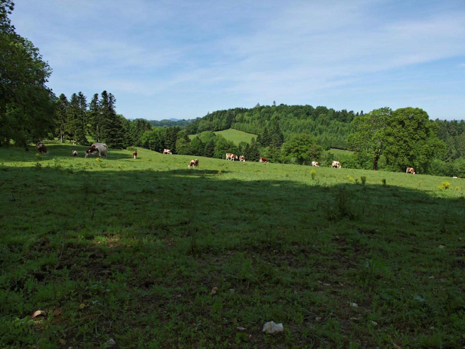 Entre Montandon et Trevillers