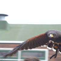 Opening Speeltuin en Roofvogelshow 17 maart 2007 - Nr_153