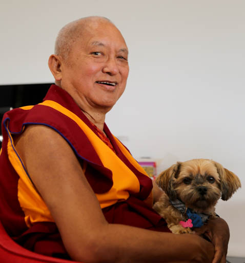 Lama Zopa Rinpoche with a cute canine friends, Adelaide, Australia, May 2015. Photo by Ven. Thubten Kunsang.