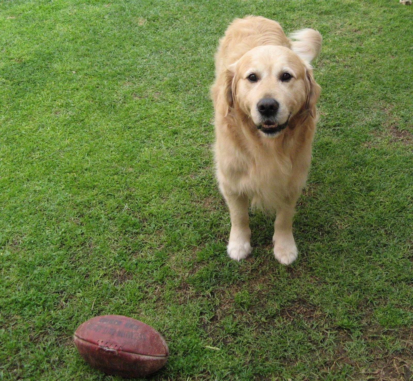 Jack and his other favourite ball. You can see his tail wagging..  it never stopped.