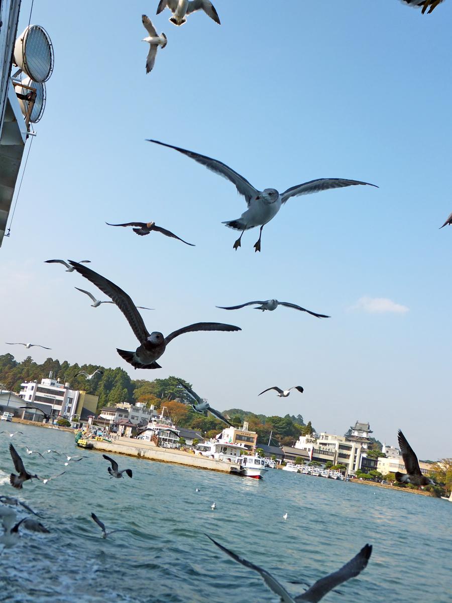 松島付近のカモメたち