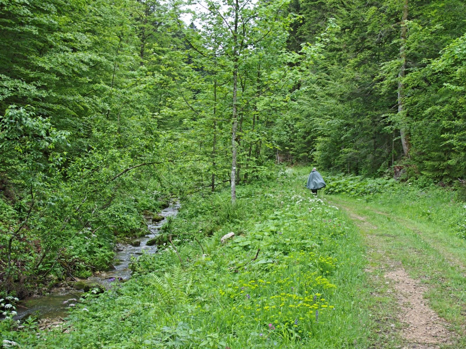 Ruisseau des Entreportes