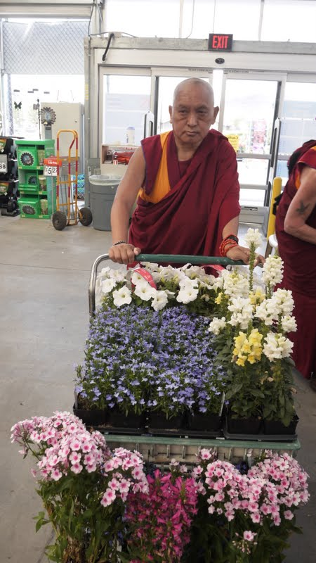 Flowers for offerings