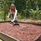 Drying of cocoa beans