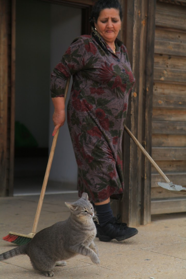 Israeli mamma with her cats